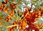 Sea Buckthorn Berry CO2